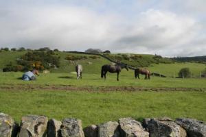 Horses Relaxing